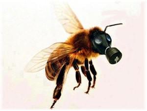 api-morte-alister
